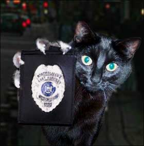 cat with a badge II