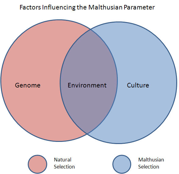 Malthus and evolution overall i refer to this hypothesis as malthusian selection malthusian selection is an exponentialist hypothesis which explains how environment and ccuart Image collections