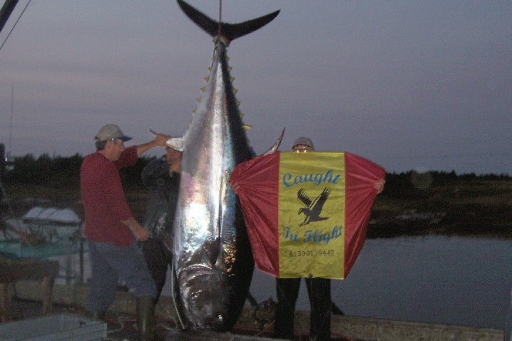 Optus member website stevenmorris for Kite fishing for tuna
