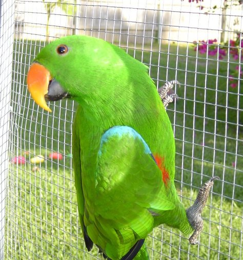BREEDERS OF QUALITY HANDRAISED COMPANION PARROTS